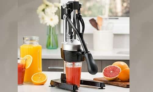 Top 10 Best Citrus Juicer 2020 Reviews & Buying Guide 2
